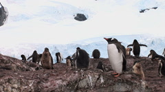 Group of Gentoo Penguins in Paradise Harbour, Antarctica Stock Footage