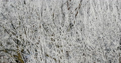Hoarfrost Covered Trees Brunches 4k - stock footage