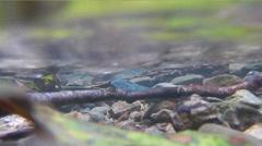 Under Fresh Water Level POV Stock Footage
