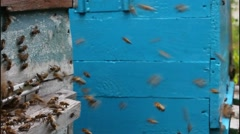Active work of the bees Stock Footage