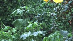 Shower of hail Stock Footage