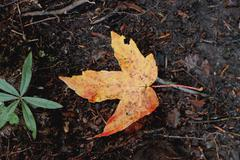 Fallen leaf on the ground. Auntumn coming Stock Photos