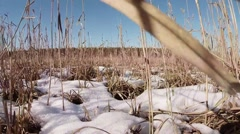 Camera in first person, animal goes on snow-covered swamps and dry grass Stock Footage