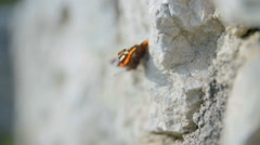 Butterfly on a stone wall Stock Footage