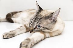 Little cat posing Stock Photos