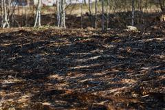 Arson dry grass, forest Stock Photos