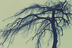 Mysterious tree, scary forest Kuvituskuvat