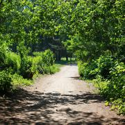 Forest, road, footpath, leafy arch of trees - stock photo