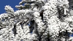 Fir tree in winter Stock Footage