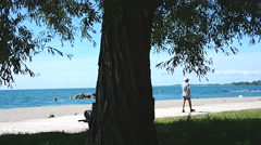 Boardwalk Beach Tree 01svv Stock Footage