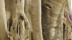 Dolly through swamp tree roots Stock Footage