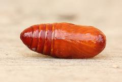 pupa red on a floor - stock photo