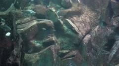 Aquarium, Fish Tank, Marine Animals Stock Footage