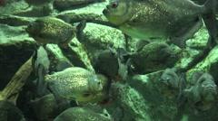 Fish, Sea Life, Aquariums, Animals, Nature Stock Footage