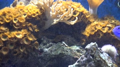 Coral Reefs, Fish, Sea Life, Underwater Stock Footage