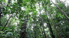 CAIRNS DAINTREE RAINFOREST Stock Footage