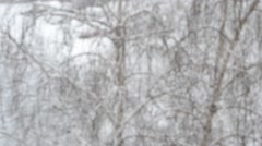 Snow falling on background of tree with dogs in background Stock Footage
