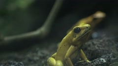Frogs, Toads, Amphibians, Animals, Nature Stock Footage