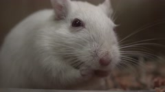 Mouse, Mice, Rodents Stock Footage