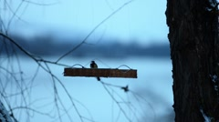 Bird feeders on the background of the river. Stock Footage