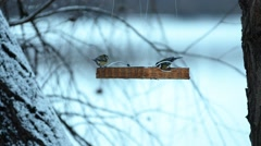 Snowy forest,river and feeder for birds. Stock Footage