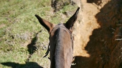 mule riding up a hill - stock footage