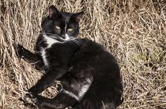 Countryside cat - stock photo