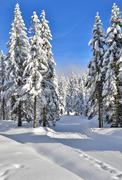 fresh track for cross-country skiing through the forest with lots of snow - stock photo
