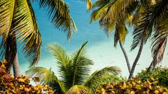 Palm Fronds over the Ocean at Bahia Honda - stock photo