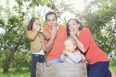 A happy family of four attractive caucasian catch apple on a fie - stock photo