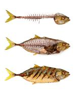 Fishbone - stock photo
