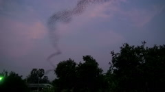 Bat Flight At Sunset - Time-lapse Stock Footage