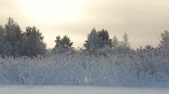 Lake shore with reed plants under snow sticking from ice, evening, sunset light Stock Footage