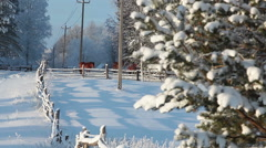 Rural landscape in Russian village with horses on snowy field at winter season Stock Footage