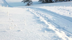 Track from the huge sled going to the distance into wintry evergreen wood, Rus Stock Footage