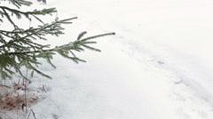 Man in felt boots (valenki) walking on snow near pine tree at winter season - stock footage