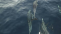 Common Dolphins swimming alone side a boat Stock Footage