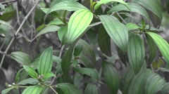 Plants, Leaves, Foliage, Nature Stock Footage
