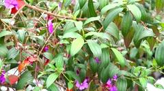 Plants, Leaves, Foliage, Nature Stock Footage