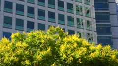 Establishing shot of Adobe Headquarters in silicon valley, california. - stock footage
