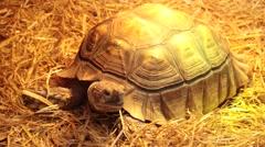Tortoise  looking around Stock Footage