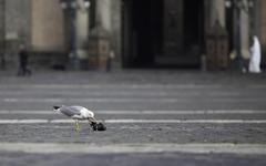 Bloody city seagull - stock photo