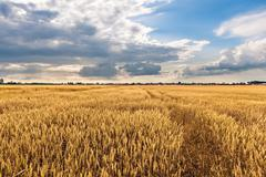 Cultivated land with cloudy sky - stock photo