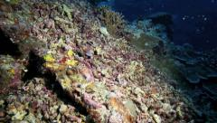 Dead and broken coral underwater at night Stock Footage