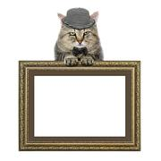 cat in a hat and a butterfly tie relies on the picture frame - stock photo