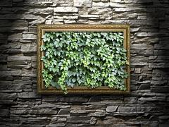 frame on the stone wall with green leaves inside.. - stock photo