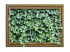 frame  with green leaves inside isolated on white background - stock photo