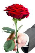 Stock Photo of red roses alive in the men's hand
