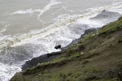Winter waves - stock photo