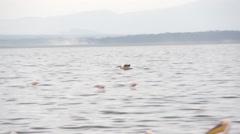 Birds swoop down over the water, Kenya Stock Footage